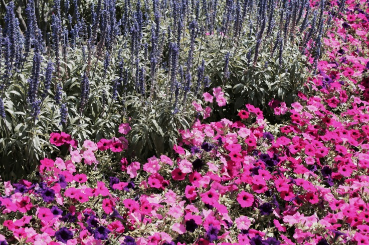 bb bloomington4.jpg