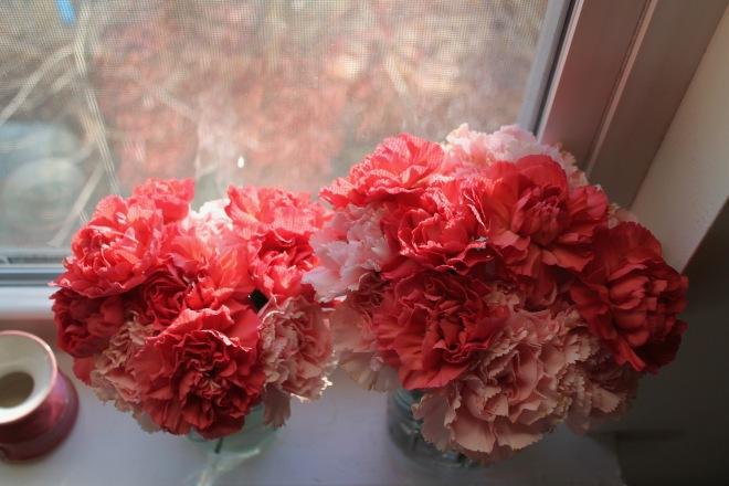 bb carnations1