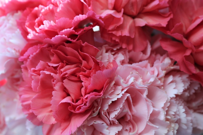 bb carnations2