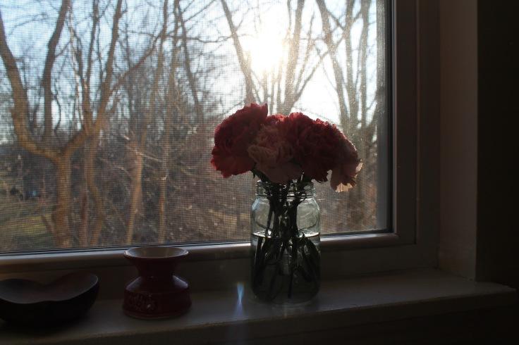 bb carnations3