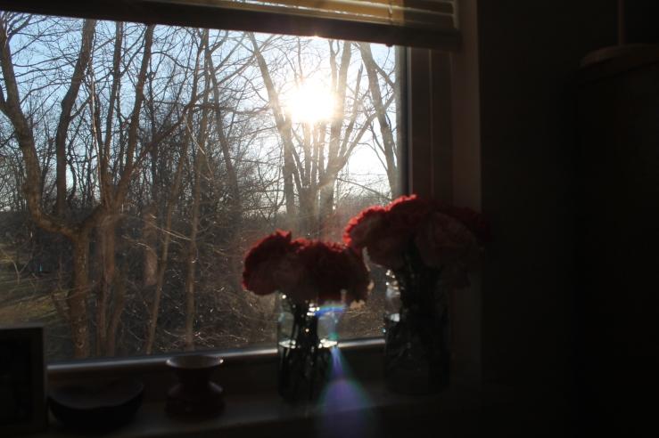 bb carnations4