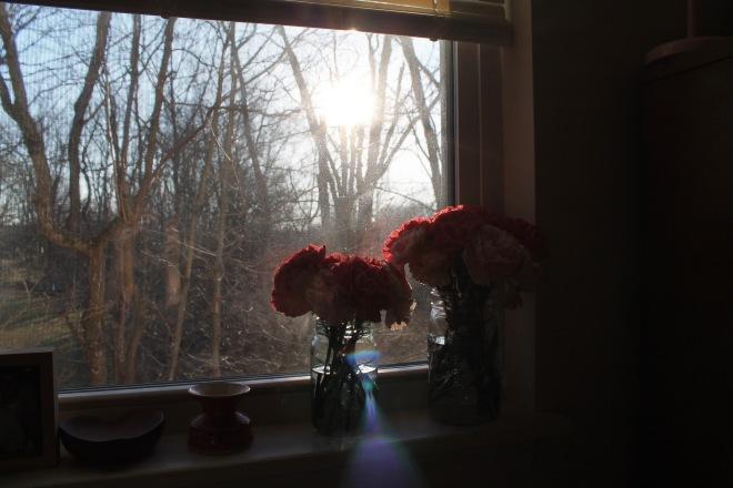 bb carnations5