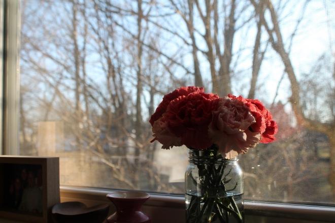 bb carnations6