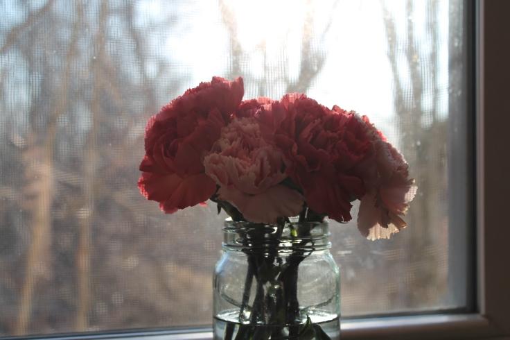 bb carnations7