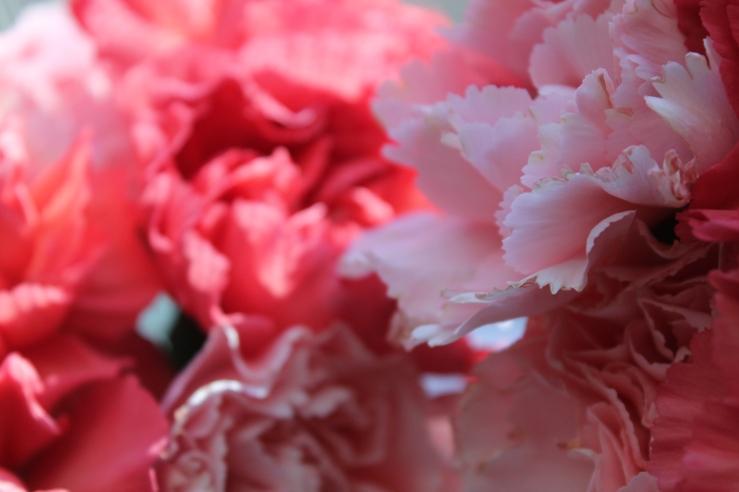 bb carnations8